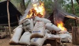Operação com foco em plantações termina com 3 mil toneladas de drogas destruídas
