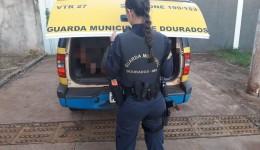 GUARDA MUNICIPAL PRENDE QUATRO  FORAGIDOS DA JUSTIÇA NO SÁBADO.