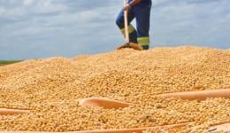Estado é o 5º maior produtor de grãos do país