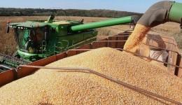 MS tem potencial de país e é o 14º maior produtor de milho do Mundo