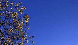 Sol predomina e umidade do ar pode atingir 'estado' de alerta neste sábado