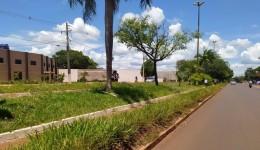 Projetos paisagísticos poderiam amenizar crise na limpeza urbana de Dourados
