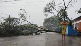 Temporal derruba árvores e alaga ruas em Dourados