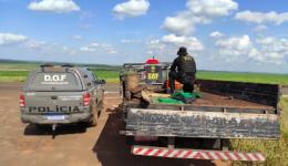 Camionete que seguia para São Paulo com mais de meia tonelada de maconha foi apreendida pelo DOF