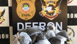 Polícia Civil apreende mais de seis quilos de skunk armazenados na Aldeia Bororó, em Dourados