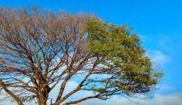 Final de semana que antecede a chegada oficial do inverno, será de tempo firme e temperaturas amenas