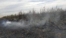 Polícia Militar Ambiental de Dourados autua empresa paulista empreiteira em R$ 1,47 milhão por incêndio em 1.470 hectares de cana-de-açúcar