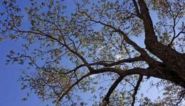 Última semana de outono será de tempo firme e temperaturas agradáveis em MS