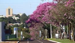 Ar seco predomina e eleva temperaturas em Mato Grosso do Sul