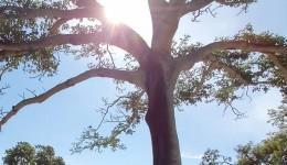 Tempo seco e grande amplitude térmica são destaques do tempo nesta sexta-feira
