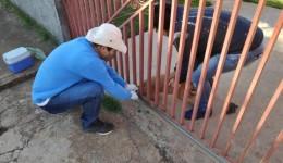 CCZ inicia campanha de vacinação antirrábica em Dourados