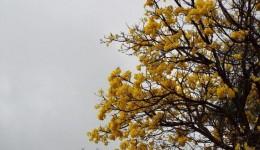 Frente fria traz esperança de chuva e refresco nas temperaturas a partir do meio da semana
