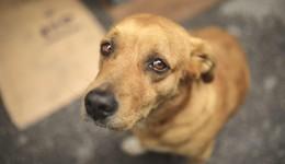 Quem cometer maus tratos contra animais terá que arcar com custos do tratamento